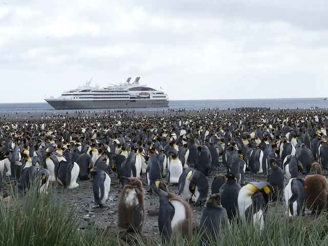 Waarom Antarctica op je bucketlist moet | Cruisemarkt