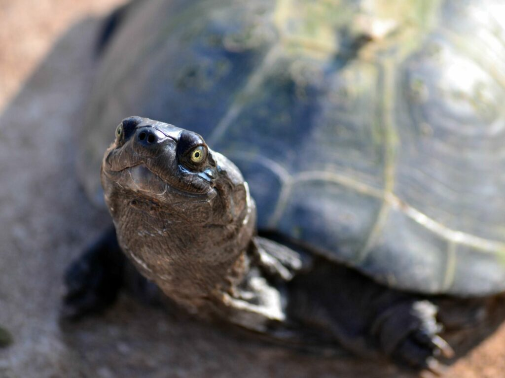 Ocean Cay MSC Reserve-schildpad