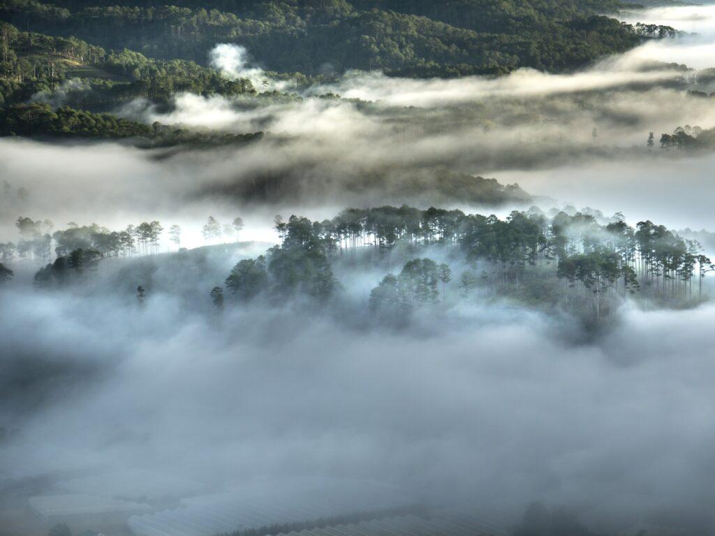 Da Lat in vietnam, hoge bomen in de mist