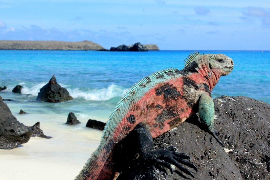 zeeleugaan in Galapagos