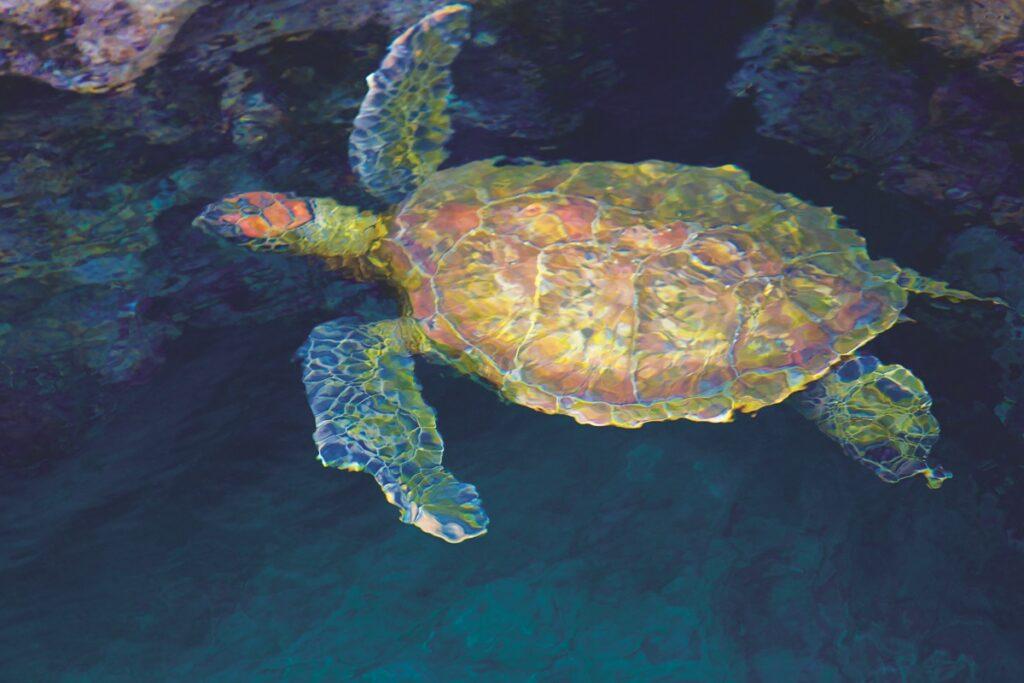 Galapagos zeeschildpad