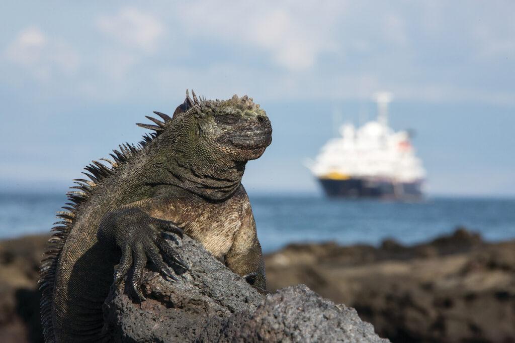 Iguana op Fernadina IJland Galapagos